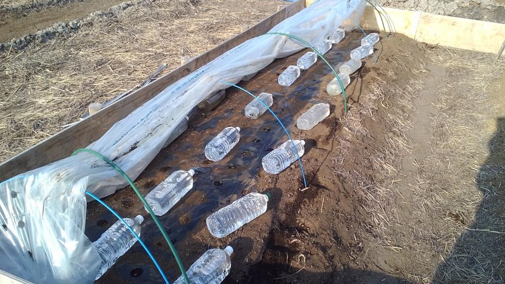 ペットボトルで保温!超促成栽培