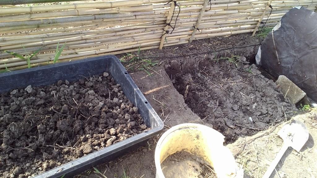 チガヤと葦の根との戦い