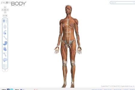 Zygote-Body 東洋医学の穴
