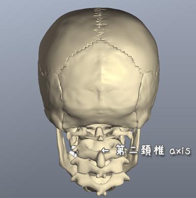 第二頚椎 ( 軸椎 ) axis