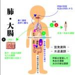 肺大腸 臓象