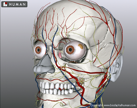BioDigital Human Explore the Body in 3D 東洋医学の穴