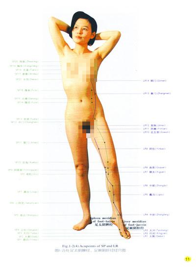 全身経穴応用解剖図譜