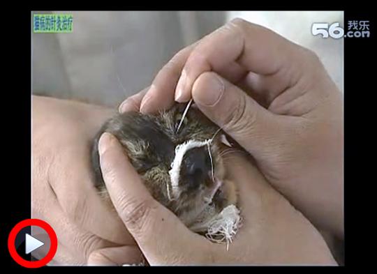 中国猫針灸事情