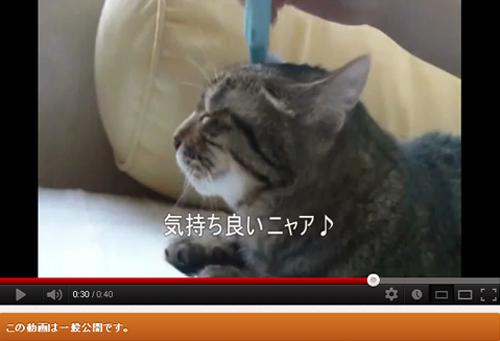 猫たんうっとり。 皮膚刺激ツールで 「 リニャックス 」