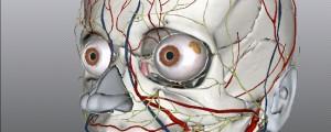 お古な PC でも使えます。 オンライン解剖学ソフト5選!
