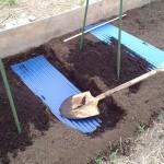 長芋のトタン栽培