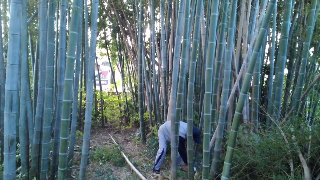 孟宗竹の伐採