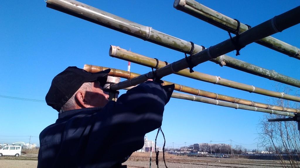 トマト棚の竹を結ぶ