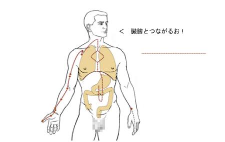 経絡と臓腑のつながり