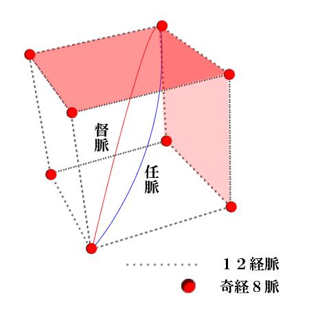 12経脈と奇経8脈モデル