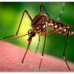 蚊と針と存在理由