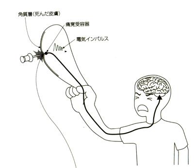 錯覚する脳 ― 「 おいしい 」 も 「 痛い 」 も幻想だった