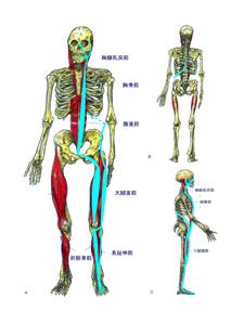 浅前線と経筋