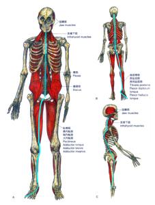 深後線と経筋
